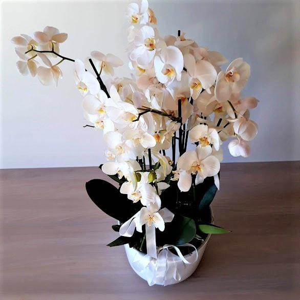 orkidea1_2-min