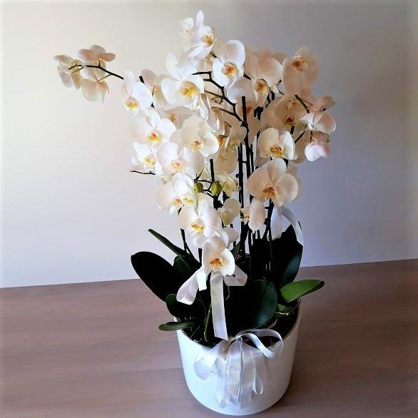 orkidea1_3-min
